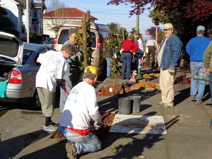Spring street tree planting